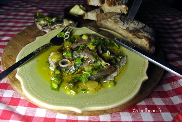 sardines-marines-(6)